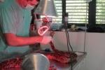 ניתוח קיסרי בנחשה